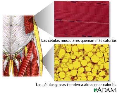 El agua y el ácido cítrico para el adelgazamiento las revocaciones