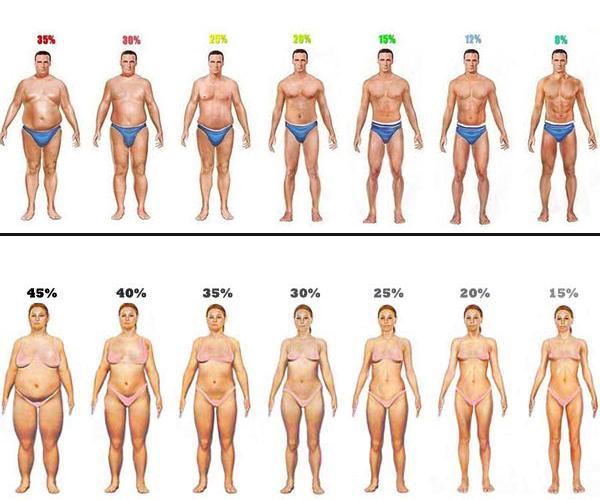 porcentaje de grasa hombres versus mujeres