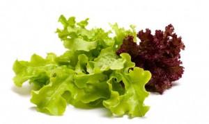 497-nutricion-lechuga-xl-668x400x80xX